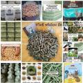 ฟรีโฆษณา ฟรีประกาศ Alfalfa, timothy,อัลฟัลฟ่า,ทิโมธี,หญ้าแห้งอาหารสัตว์,หญ้าโปรตีนสูง,ขายปลีกและส่งอัลฟัลฟ่า,ขายหญ้าราคาถูก,หญ้าอาหารกระต่าย ม้า แก๊สบี้, กระต่าย,หญ้าแห้ง,ห,หญ้ากระต่าย,ม้า