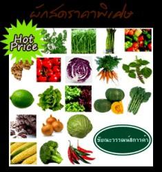 ฟรีโฆษณา ฟรีประกาศ ส่งผัก , ผักสด , ผักสลัด , พริกสด ,  มะเขือเทศ,,,,